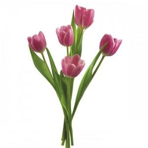 Купить тюльпан в Хабаровске