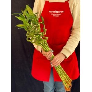 Купить бамбук поштучно с доставкой в Хабаровске