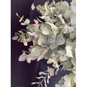 Купить эвкалипт цинерия поштучно с доставкой в [r-seoseo-city-name-pp]