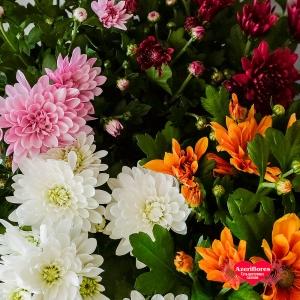Купить кустовую хризантему в горшке в Хабаровске