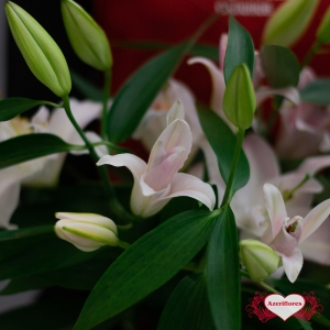 Купить лилию в Хабаровске