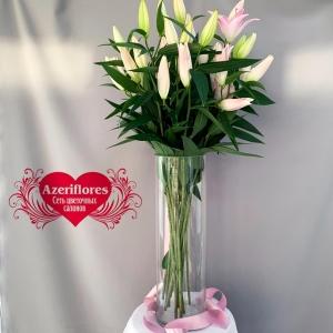 Купить лилию в Хабаровске по оптовым ценам