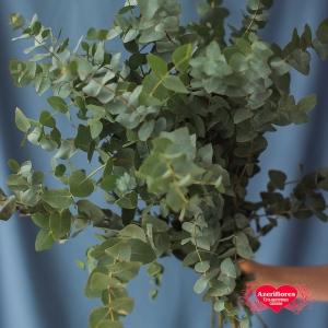 Купить ветку эвкалипта в Хабаровске
