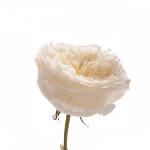 Купить пионовидные розы в Хабаровске