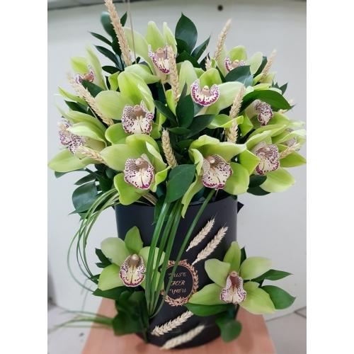 Купить королевскую орхидею в коробке в Хабаровске