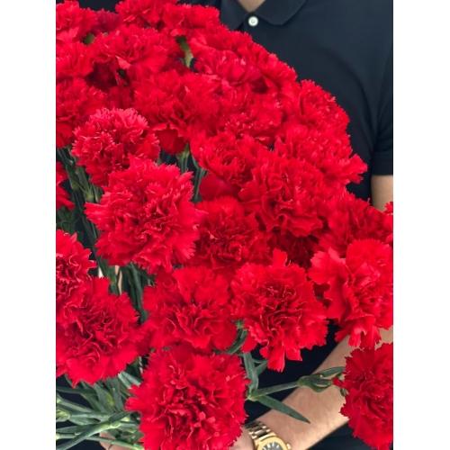 Купить красную гвоздику с доставкой в [r-seoseo-city-name-pp]