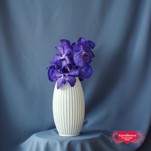 Купить орхидею Ванда (Vanda) в Хабаровске