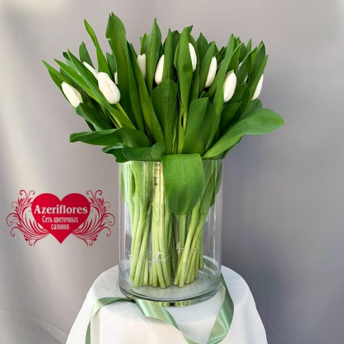 Купить тюльпаны в Хабаровске по оптовым ценам